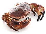 Professional Shellfish Suppliers in Ireland