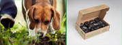 Compostable Dog Waste Bags | Eco-Friendly Dog Bags